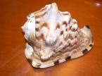 *** shell